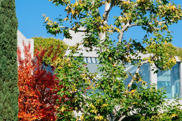 Skirball campus in the fall